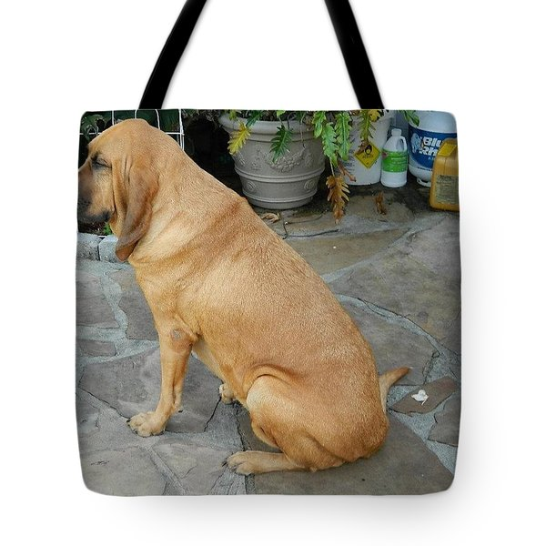 Cujo Sitting Around Tote Bag