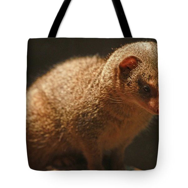 Tote Bag featuring the photograph Curiosity At Rest by Laddie Halupa