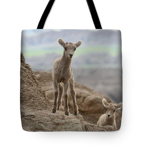 Curiosity In The Badlands Tote Bag