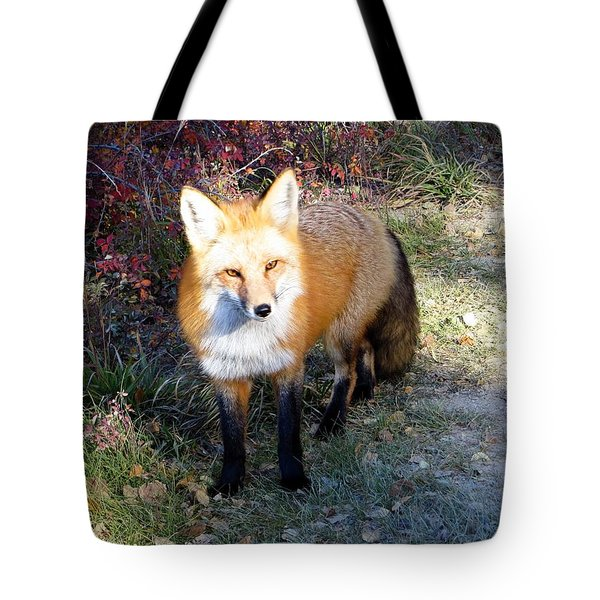 Curiosity Tote Bag by Karen Shackles