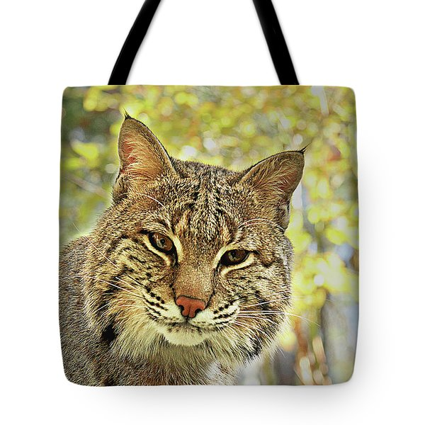 Tote Bag featuring the photograph Curiosity The Bobcat by Jessica Brawley