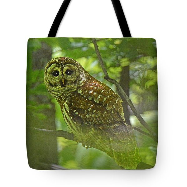 Curious Barred Owl Tote Bag