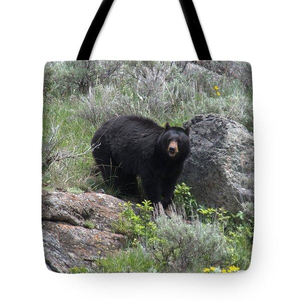 Curious Black Bear Tote Bag