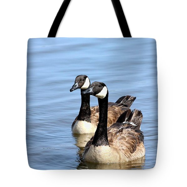 Tote Bag featuring the photograph Curious Canda Geese by Sheila Brown
