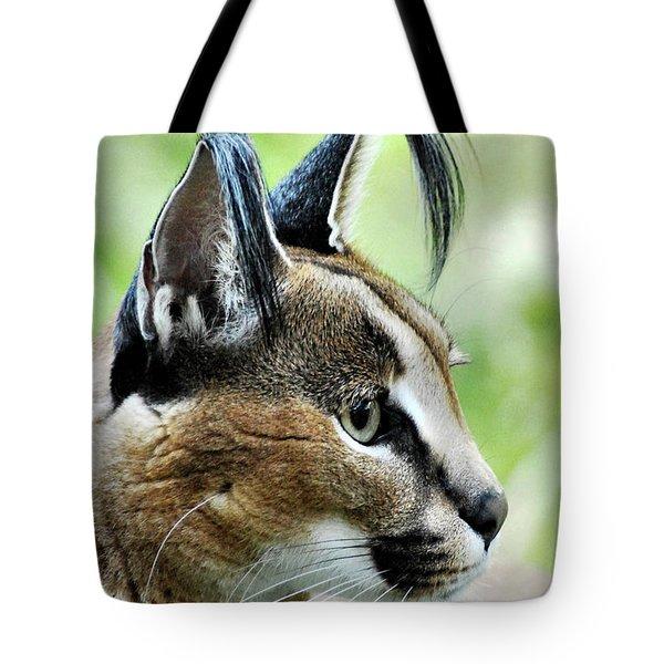 Curious Caracal Tote Bag