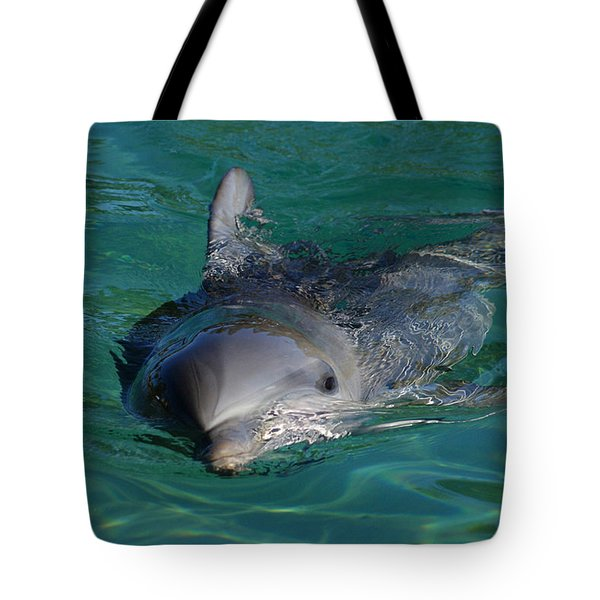 Curious Dolphin Tote Bag by Gary Crockett