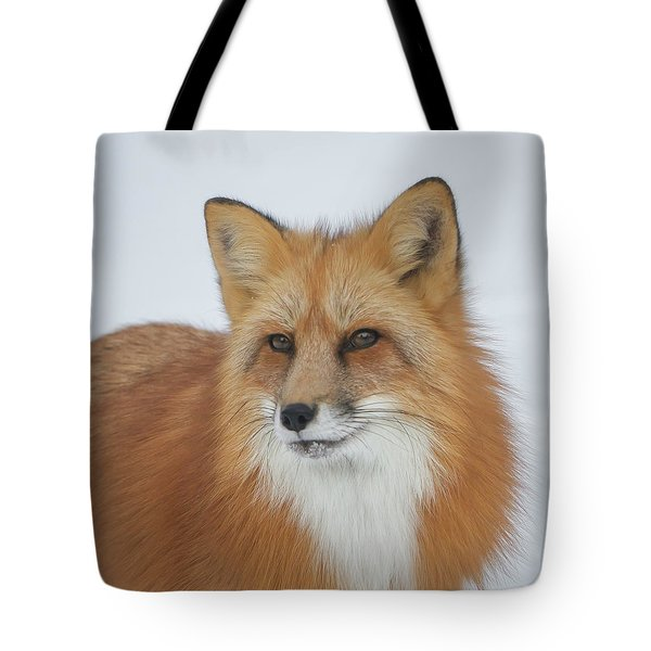 Curious Fox Tote Bag
