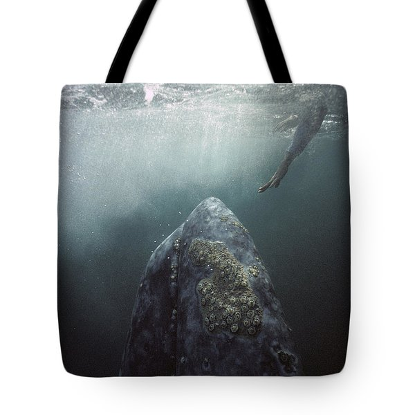 Tote Bag featuring the photograph Curious Gray Whale And Tourist by Tui De Roy