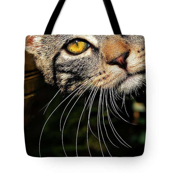 Curious Kitten Tote Bag by Meirion Matthias