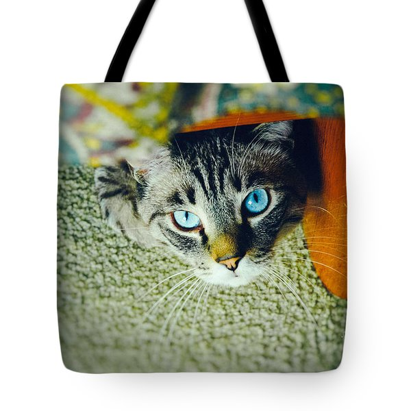Tote Bag featuring the photograph Curious Kitty by Silvia Ganora