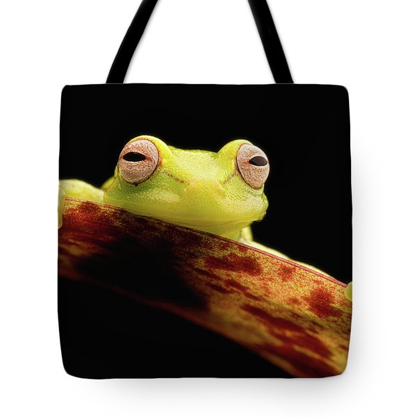 Curious Little Amazonian Tree Frog Tote Bag