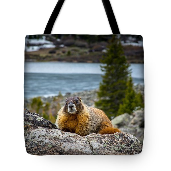 Curious Marmot Tote Bag