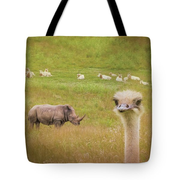 Curious Ostrich And White Rhino Tote Bag