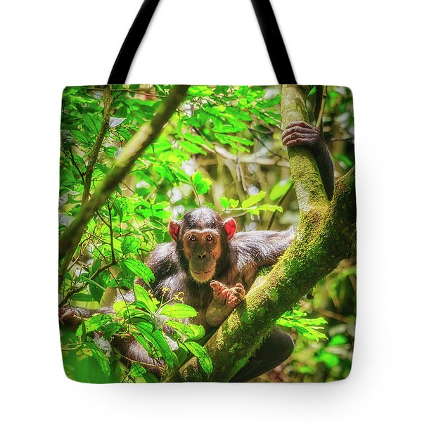 Tote Bag featuring the photograph Curious by Rick Furmanek