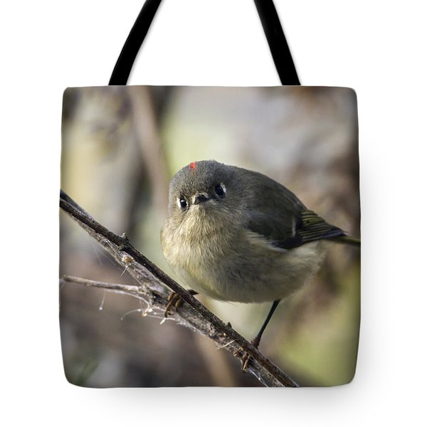Curious Ruby-crowned Kinglet Tote Bag