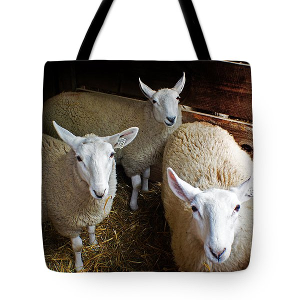 Curious Sheep Tote Bag
