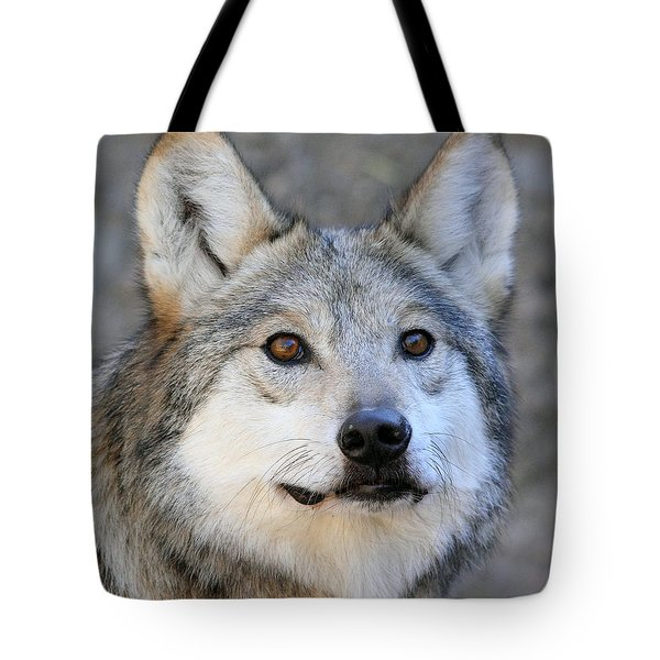 Curious Wolf Tote Bag