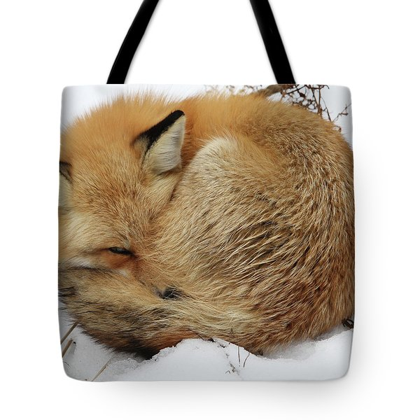 Curled Up Fox Tote Bag