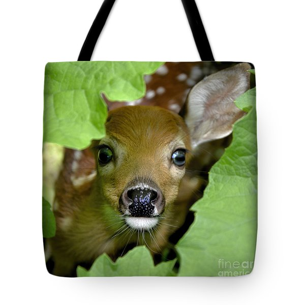 Curous Fawn Tote Bag