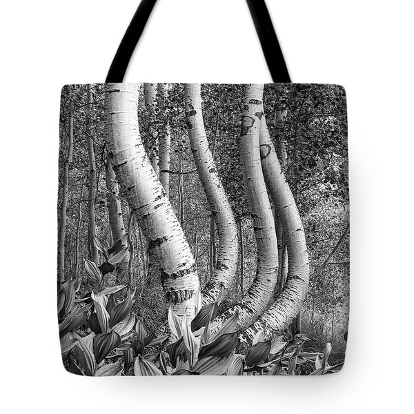 Curved Aspens Tote Bag