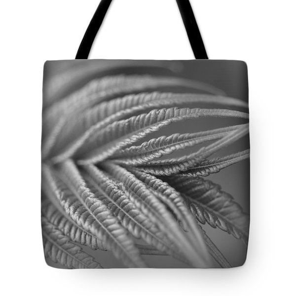 Curved Lines Tote Bag