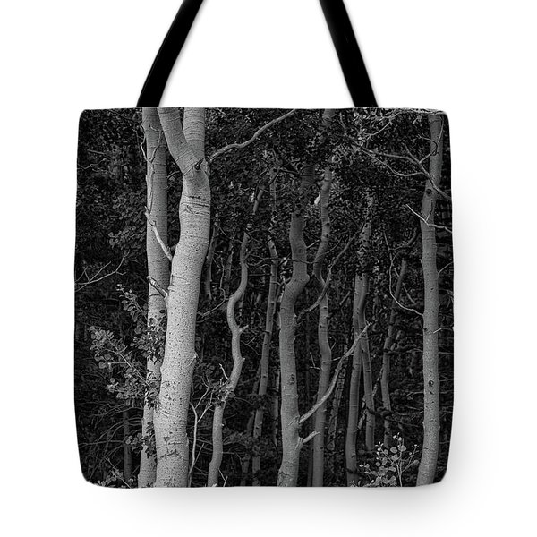 Tote Bag featuring the photograph Curves Of A Forest by James BO Insogna