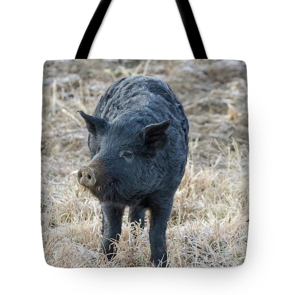 Tote Bag featuring the photograph Cute Black Pig by James BO Insogna