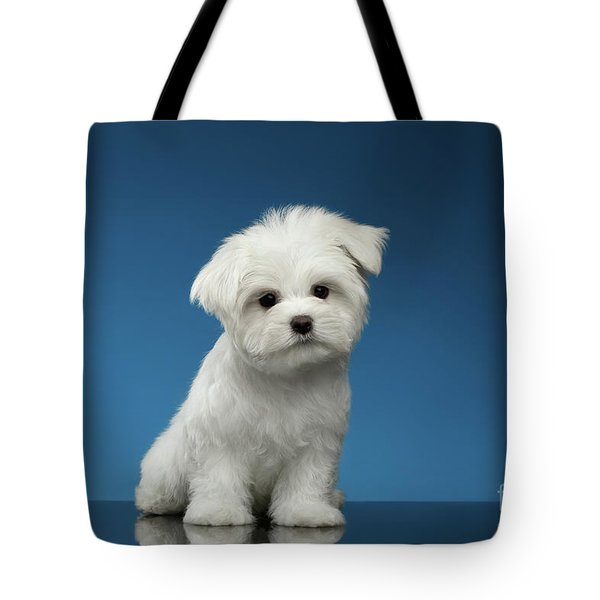 Cute Pure White Maltese Puppy Standing And Curiously Looking In Camera Isolated On Blue Background Tote Bag by Sergey Taran