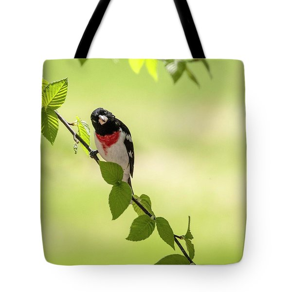 Cute Rose-breasted Grosbeak Tote Bag