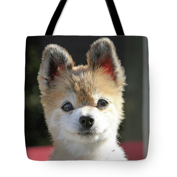 Cute Stare Down Tote Bag by Shoal Hollingsworth
