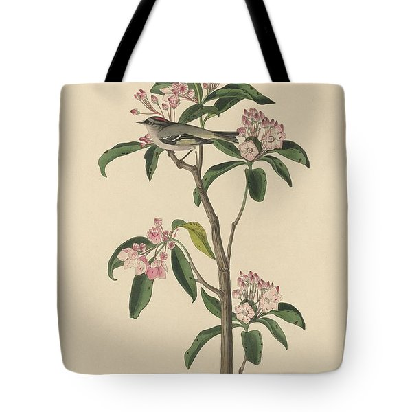 Cuvier's Wren Tote Bag by Dreyer Wildlife Print Collections