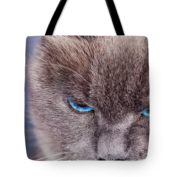 Cybil Tote Bag