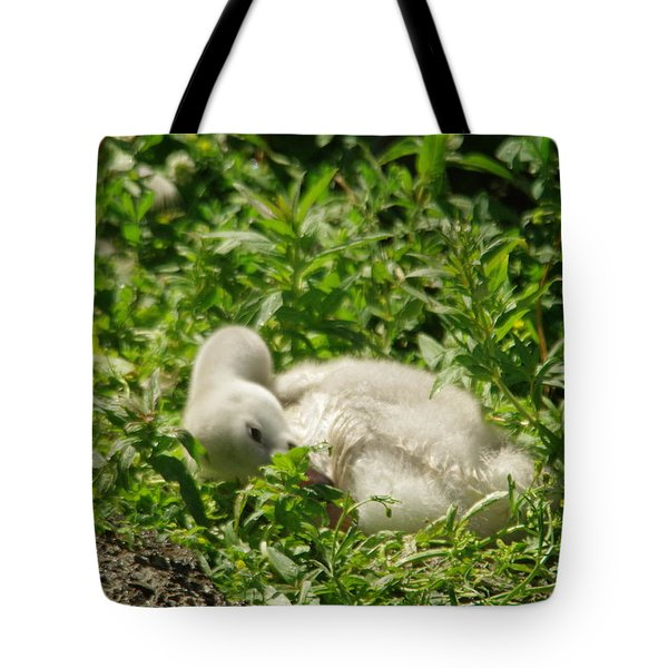 Cygnet Getting Ready To Nap Tote Bag