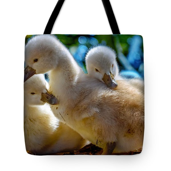 Cygnet Siblings Tote Bag