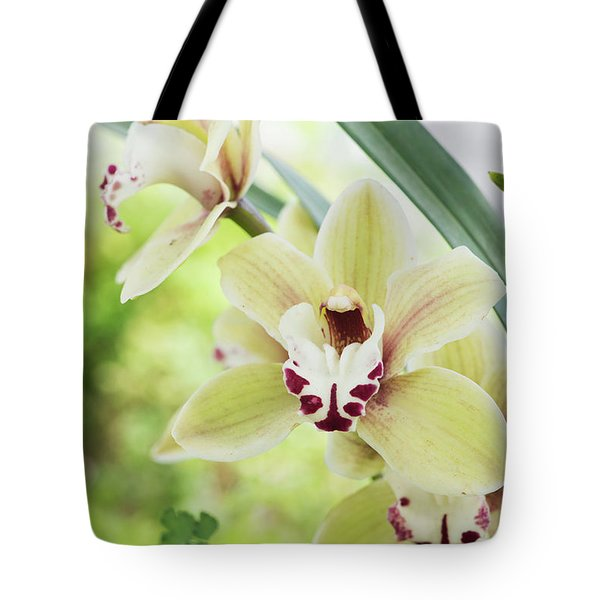 Tote Bag featuring the photograph  Cymbidium Orchid by Tim Gainey