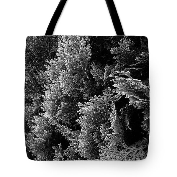 Cypress Branches No.1 Tote Bag