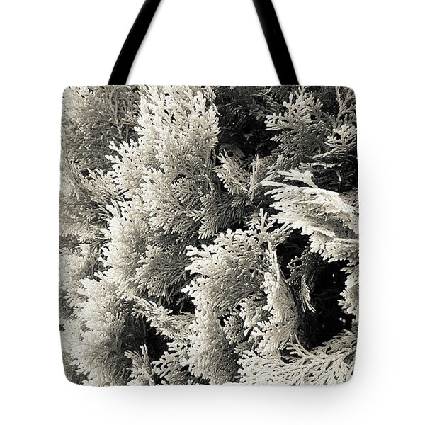 Cypress Branches No.2 Tote Bag