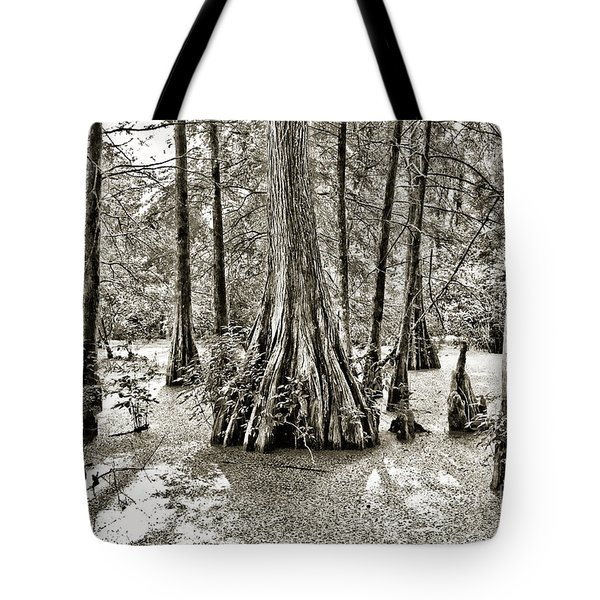 Cypress Evening Tote Bag by Scott Pellegrin