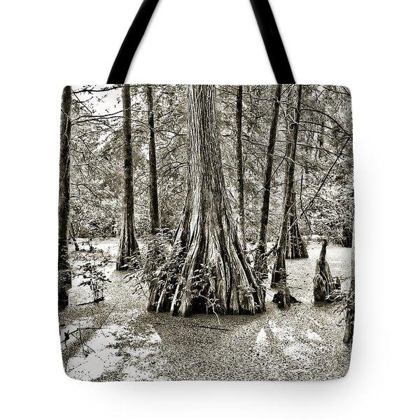 Cypress Evening Tote Bag by Scott Pellegrin