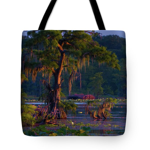 Cypress In The Sunset Tote Bag