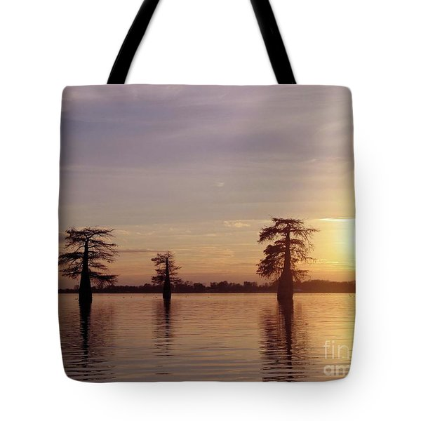 Cypress Sunset Tote Bag by Sheila Ping