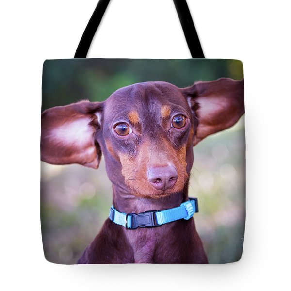 Dachshund Ears Up Tote Bag by Stephanie Hayes
