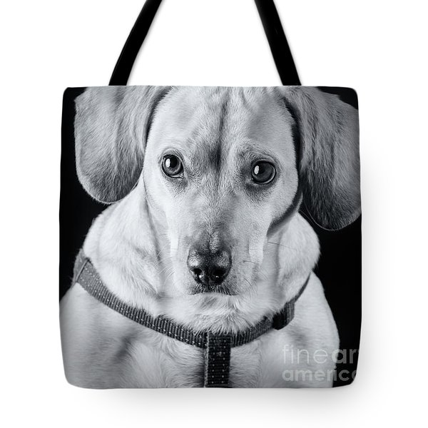 Dachshund Lab Mix Tote Bag by Stephanie Hayes