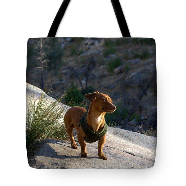 Dachshund's Delight Tote Bag