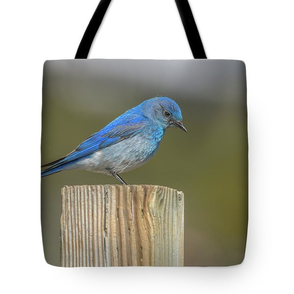 Daddy Bluebird Guarding Nest Tote Bag