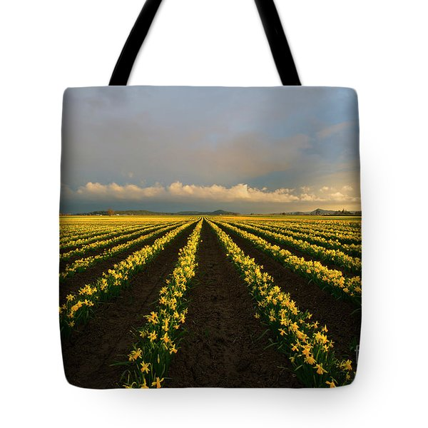 Tote Bag featuring the photograph Daffodil Storm by Mike Dawson
