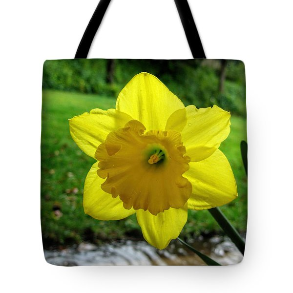 Daffodile In The Rain Tote Bag