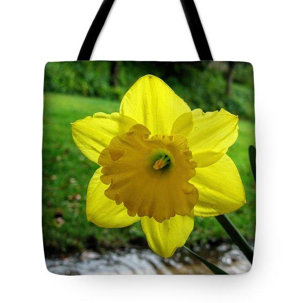 Daffodile In The Rain Tote Bag by Dorothy Cunningham