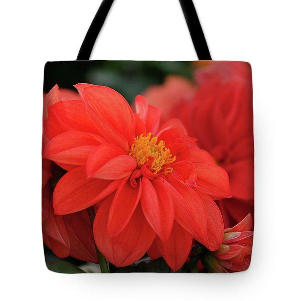 Dahlia Bloomer Tote Bag