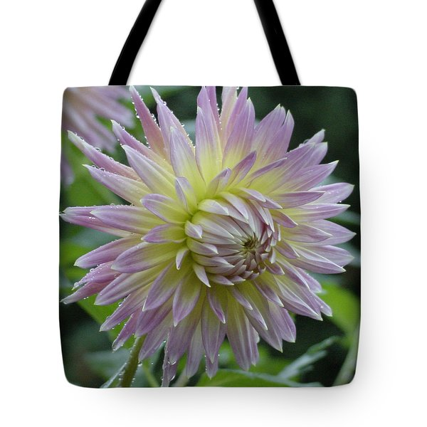 Dahlia Delight Tote Bag by Shirley Heyn